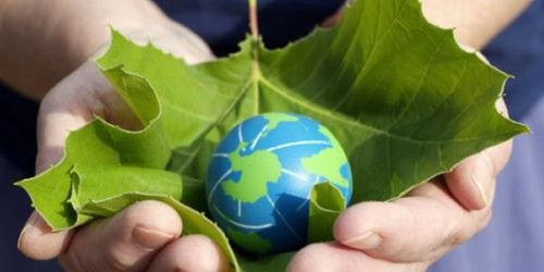 Celebrate World Environment Day with your class